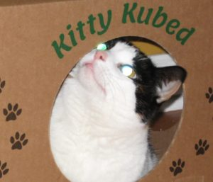 Cat Box Toy