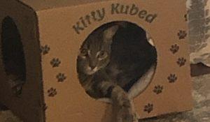 Kitty Kubed