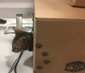 Toy Box For Cat