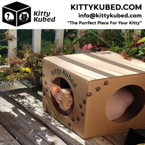 Box For Cats